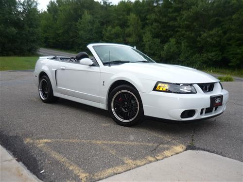 bill terry's 2003 ford  mustang cobra